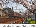 cherry blossom, cherry tree, sakura 76457198
