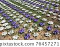 Flower 76457271