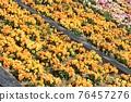 Flower 76457276