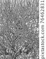 梅花 梅 花朵 76462831