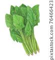 spinach, vegetables, vegetable 76466423