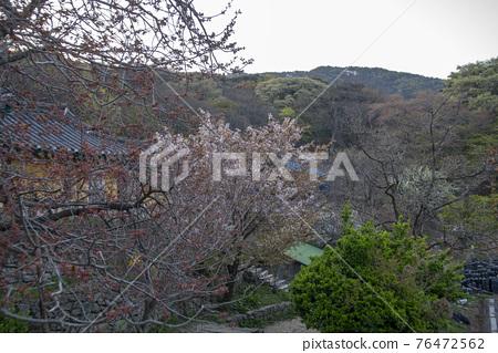 개심사,서산시,충남 76472562