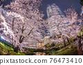 모리 정원의 벚꽃과 롯폰기 힐즈 76473410