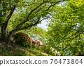 봄에 피는 벚꽃과 철쭉이 한 번에 피는 드문 봄 풍경 76473864