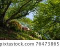 봄에 피는 벚꽃과 철쭉이 한 번에 피는 드문 봄 풍경 76473865