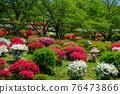봄에 피는 벚꽃과 철쭉이 한 번에 피는 드문 봄 풍경 76473866