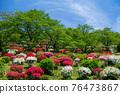 봄에 피는 벚꽃과 철쭉이 한 번에 피는 드문 봄 풍경 76473867