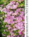 봄에 피는 벚꽃과 철쭉이 한 번에 피는 드문 봄 풍경 76473868