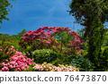 봄에 피는 벚꽃과 철쭉이 한 번에 피는 드문 봄 풍경 76473870