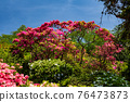봄에 피는 벚꽃과 철쭉이 한 번에 피는 드문 봄 풍경 76473873