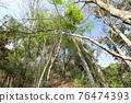 台灣登山攝影 深秋的森林 76474393