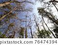 台灣登山攝影 深秋的森林 76474394