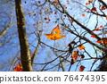 台灣登山攝影 深秋的森林 76474395