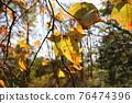 台灣登山攝影 深秋的森林 76474396