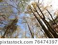 台灣登山攝影 深秋的森林 76474397