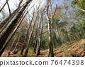 台灣登山攝影 深秋的森林 76474398