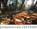 台灣登山攝影 深秋的森林 76474400