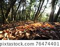 台灣登山攝影 深秋的森林 76474401