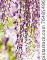 wisteria, bloom, blossom 76485496