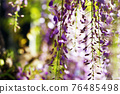 wisteria, bloom, blossom 76485498