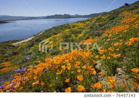 春天 春 花朵 76487143