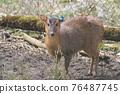 mammalian, animal, animals 76487745