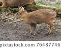 mammalian, animal, animals 76487746