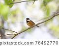 野生鳥類 野鳥 鳥兒 76492770