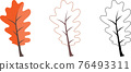Set of different oaks leaves. Includes colorful, contour and black-white leaves. 76493311
