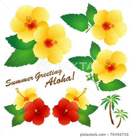 Hibiscus (yellow) 76498738