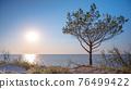 Tree on beach at sunset 76499422