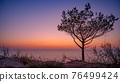 Tree on beach at sunset 76499424