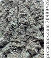Tree bark texture 76499426