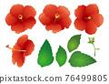 hibiscus, flower, flowers 76499805