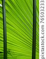 Palm Tree Leaf Pattern Framed By Stems 76503233