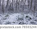 Winter Forest Wilderness 76503244