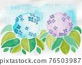 繡球花 植物 植物學 76503987