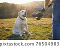 Cute dog posing for filming on meadow 76504983