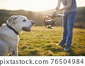 Cute dog posing for filming on meadow 76504984