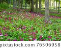 高山溫泉 花朵 花 76506958