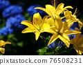 flower, flowers, botanic 76508231