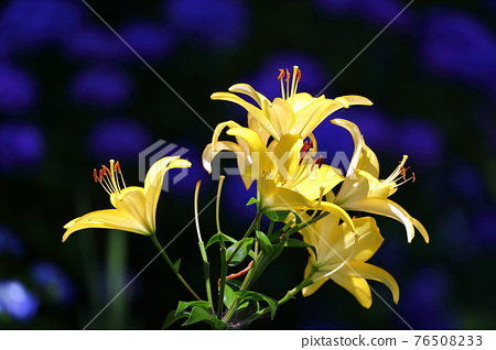 flower, flowers, botanic 76508233