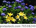flower, flowers, botanic 76508240
