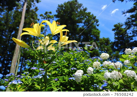 bloom, blossom, blossoms 76508242