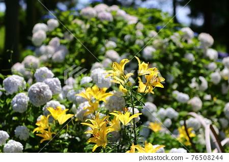 flower, flowers, botanic 76508244
