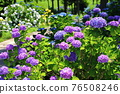 flower, flowers, botanic 76508246