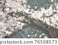 yoshino cherry, yoshino cherry tree, cherry blossom 76508573