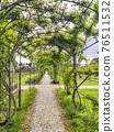 rose garden pergola 76511532