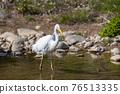 bird, birds, fowls 76513335