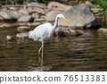 bird, birds, fowls 76513383